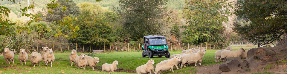 Tour a sheep farm in Rotorua