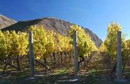 Appellation Private Millbrook Golf and Wine Tour