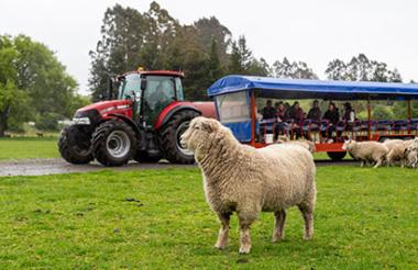 Auckland to Rotorua including Waitomo and Rotorua Experience with GreatSights