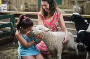 Agrodome Farm Show and Farm Tour Combo