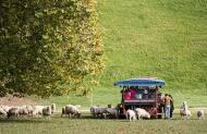 Agrodome Farm Show and Farm Tour Combo
