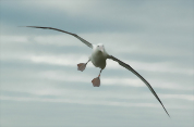Royal Albatross Centre: Albatross Classic Tour