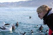 Albatross Encounter Tours