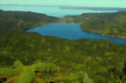 Bush and Beach Coast and Rainforest Full Day Tour