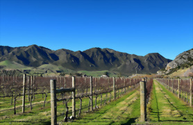 9 day South Island Wine Adventure - Day 1