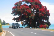 Snells Beach to Coromandel Township