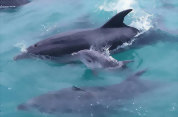 Dolphin Eco Encounter with Fullers GreatSights