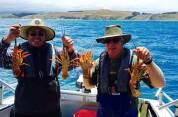 Kaikoura Crayfish and Fishing Charter with Fish Kaikoura