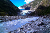 Fox Guides Walk to the Terminal of the Fox Glacier
