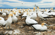 Takapu Refuge (Gannet Colony)