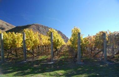 Art, Wine and Heritage Tour