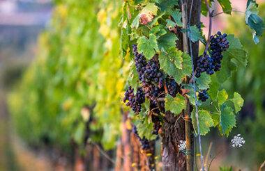 Grape Escape Half Day Wine Tour