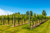 Hawke's Bay Wine Experience half day tour