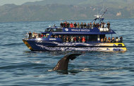 Christchurch to Kaikoura Day Tour with Whale Watch