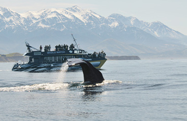 Kaikoura Coach Day Tour including Whale Watching