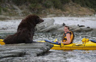Kaikoura Kayaks - Guided Seal Kayaking Half Day Experience