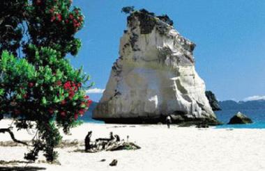 Kiwi Dundee Nature & Coast tour