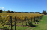 Great Tastes Half Day Kumeu Wine Country Tour with Lunch