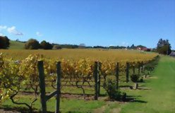 Auckland to Christchurch Essential Wine Explorer - day 2