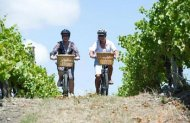 Bike the Vineyards (green Jersey explorer tours)