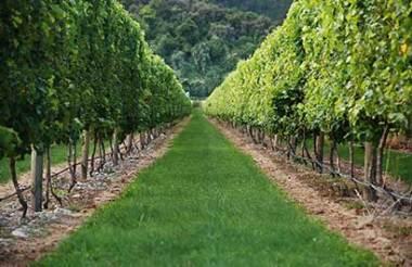 Half Day Marlborough Wine Tour