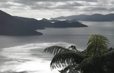 Half Day Guided Kayaking in the Marlborough Sounds