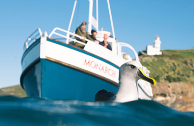 Monarch Wildlife Cruise from Wellers Rock