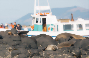 Monarch Wildlife Cruise and Yellow Eyed Penguin Tour