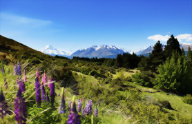 APT Tours 18 Day Royal Tourer New Zealand - Day 16