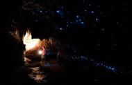 Nikau Gloworm Cave