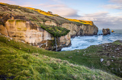 Explore Dunedin and the Otago Peninsula