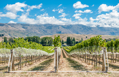 Explore the Wineries and Vineyards of Gibbston Valley