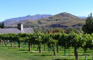 The Original Wine Tour with Queenstown Wine Trail