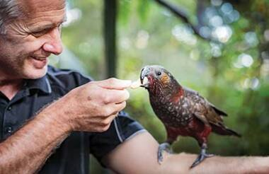 Rainbow Springs and National Kiwi Hatchery Combo