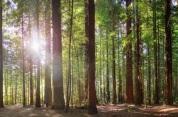 Walking and biking in The Redwoods - Whakarewarewa Forest
