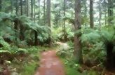 Walking and biking in The Redwoods - Whakarewarewa Forest