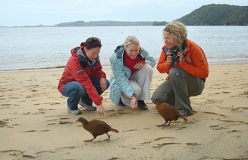 16 Day Southern Coast and Stewart Island Nature Tour - day 8