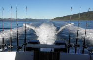 Queen Charlotte Sounds Fishing Charter - 4 Hour Excursion