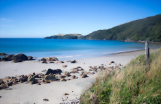 16 Day Southern Coast and Stewart Island Nature Tour