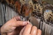 Te Puia: Te Rā Daytime Experience