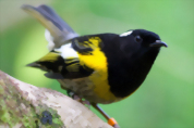 Tiritiri Matangi Island Wildlife Discovery including guided walk