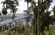 West Coast Treetops Walkway Hokitika