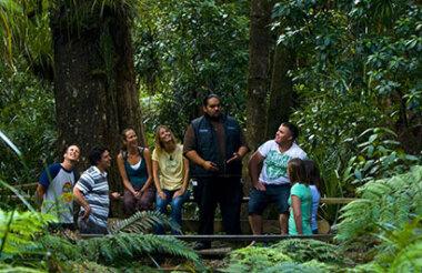Twilight Waipoua Encounter