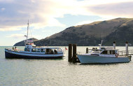 Otago Peninsula Sundowner Tour