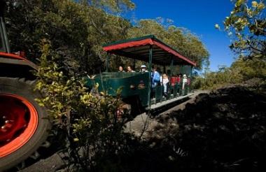 Fullers Rangitoto Volcanic Explorer