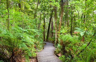 Auckland to Waipoua Forest