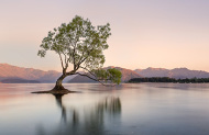 Arrowtown and Wanaka Premium Full Day Tour