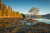 Lake Wanaka Cruise and Island Nature Walk