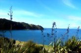 Bay of Islands (Paihia) to Snells Beach