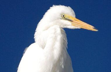 White Heron Sanctuary Tour
